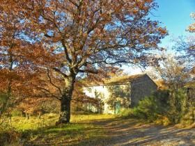 Tuscan Property [814]