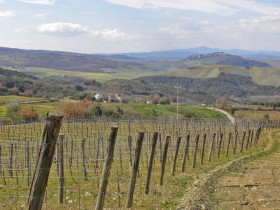 Land in the vineyard for sale in Tuscany [ 839]
