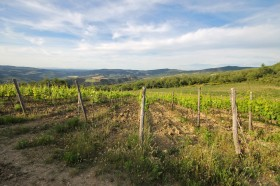Toscana vigneto in vendita [Az152]